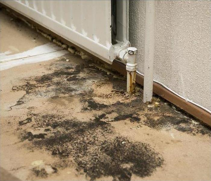 Mold grows on a floor by a radiator pipe