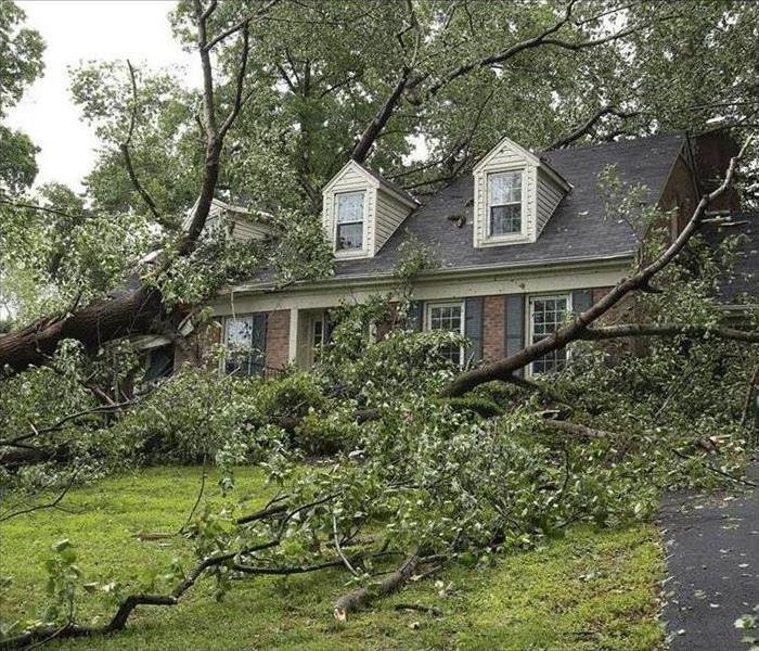 A blown-over tree in the front yard of a brick house